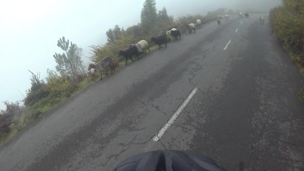 Schafe kreuzen unseren Weg